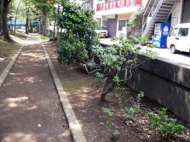 10_kawashimohashi_2